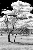 Awesome South Africa Collection B&W - Dead Tree in the African Savannah III Photographic Print by Philippe Hugonnard
