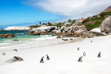 Awesome South Africa Collection - African Penguins at Boulders Beach Photographic Print by Philippe Hugonnard