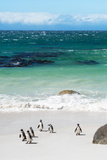 Awesome South Africa Collection - African Penguins at Boulders Beach VII Photographic Print by Philippe Hugonnard
