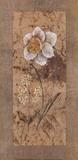 Antique Daffodil Prints by Stefania Carlini