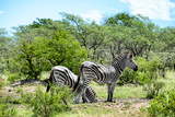 Awesome South Africa Collection - Two Burchell's Zebra III Photographic Print by Philippe Hugonnard