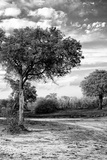 Awesome South Africa Collection B&W - African Landscape with Acacia Tree X Photographic Print by Philippe Hugonnard