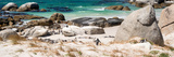 Awesome South Africa Collection Panoramic - African Penguin Colony Photographic Print by Philippe Hugonnard