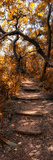Awesome South Africa Collection Panoramic - African Forest Fall Colors Photographic Print by Philippe Hugonnard
