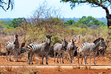 Awesome South Africa Collection - Zebras Herd on Savanna Photographic Print by Philippe Hugonnard