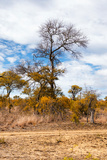 Awesome South Africa Collection - African Savanna Trees XIII Photographic Print by Philippe Hugonnard