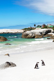 Awesome South Africa Collection - African Penguins at Boulders Beach III Photographic Print by Philippe Hugonnard