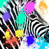 Safari Colors Pop Collection - Zebra Portrait Giclee Print by Philippe Hugonnard