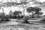 Awesome South Africa Collection B&W - African Landscape with Acacia Tree XI Photographic Print by Philippe Hugonnard