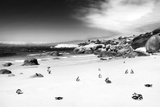 Awesome South Africa Collection B&W - African Penguins at Foxi Beach Photographic Print by Philippe Hugonnard