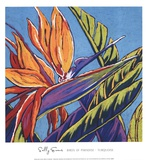 Birds of Paradise - Turquoise Posters by Sally Evans