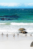 Awesome South Africa Collection - African Penguins at Boulders Beach V Photographic Print by Philippe Hugonnard