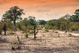 Awesome South Africa Collection - Savanna Landscape at Sunrise Photographic Print by Philippe Hugonnard