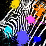 Safari Colors Pop Collection - Zebra Portrait II Giclee Print by Philippe Hugonnard