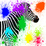 Safari Colors Pop Collection - Zebra Profile II Giclee Print by Philippe Hugonnard