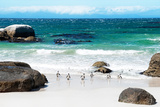Awesome South Africa Collection - African Penguins at Boulders Beach IV Photographic Print by Philippe Hugonnard