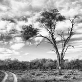 Awesome South Africa Collection Square - Safari Road B&W Photographic Print by Philippe Hugonnard