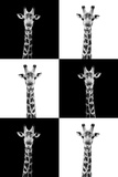 Safari Profile Collection - Giraffes Photographic Print by Philippe Hugonnard