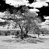 Awesome South Africa Collection Square - African Acacia Tree B&W Photographic Print by Philippe Hugonnard