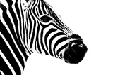Safari Profile Collection - Zebra Portrait White Edition II Photographic Print by Philippe Hugonnard