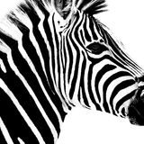Safari Profile Collection - Zebra Portrait White Edition Photographic Print by Philippe Hugonnard