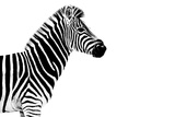 Safari Profile Collection - Zebra White Edition Photographic Print by Philippe Hugonnard