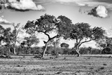 Awesome South Africa Collection B&W - Savanna Trees Photographic Print by Philippe Hugonnard