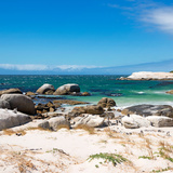 Awesome South Africa Collection Square - African Penguins at Boulders Beach Photographic Print by Philippe Hugonnard