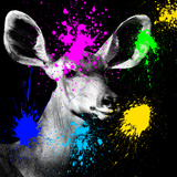 Safari Colors Pop Collection - Antelope Portrait IV Giclee Print by Philippe Hugonnard