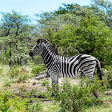 Awesome South Africa Collection Square - Zebra Profile Photographic Print by Philippe Hugonnard