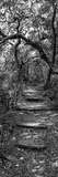 Awesome South Africa Collection Panoramic - African Forest B&W Photographic Print by Philippe Hugonnard