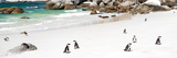 Awesome South Africa Collection Panoramic - Penguins at Boulders Beach Fotografisk tryk af Philippe Hugonnard