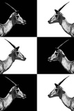 Safari Profile Collection - Antelopes Impalas Photographic Print by Philippe Hugonnard