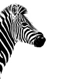 Safari Profile Collection - Zebra Portrait White Edition III Photographic Print by Philippe Hugonnard