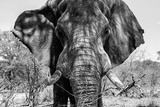 Awesome South Africa Collection B&W - Elephant Portrait VII Photographic Print by Philippe Hugonnard