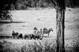 Awesome South Africa Collection B&W - Herds of Zebras and Cape Buffalos Photographic Print by Philippe Hugonnard