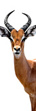 Safari Profile Collection - Antelope White Edition IV Photographic Print by Philippe Hugonnard