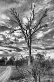 Awesome South Africa Collection B&W - African Landscape with Acacia Tree III Photographic Print by Philippe Hugonnard