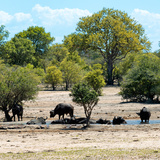 Awesome South Africa Collection Square - Herd of Buffalos Photographic Print by Philippe Hugonnard