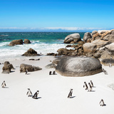 Awesome South Africa Collection Square - African Penguin Colony Photographic Print by Philippe Hugonnard