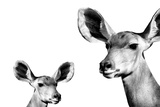 Safari Profile Collection - Antelope and Baby White Edition II Photographic Print by Philippe Hugonnard
