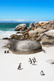 Awesome South Africa Collection - African Penguins at Boulders Beach X Photographic Print by Philippe Hugonnard