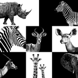 Safari Profile Collection Photographic Print by Philippe Hugonnard