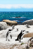 Awesome South Africa Collection - African Penguins at Boulders Beach XII Photographic Print by Philippe Hugonnard
