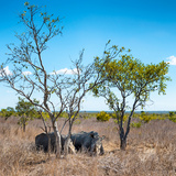 Awesome South Africa Collection Square - Two Rhino sleeping in the Savanna Photographic Print by Philippe Hugonnard