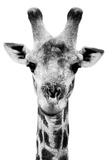 Safari Profile Collection - Portrait of Giraffe White Edition V Photographic Print by Philippe Hugonnard