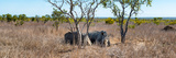 Awesome South Africa Collection Panoramic - Two Rhinos in Savanna Photographic Print by Philippe Hugonnard