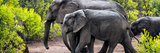 Awesome South Africa Collection Panoramic - Elephant Family Photographic Print by Philippe Hugonnard