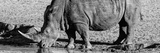 Awesome South Africa Collection Panoramic - Black Rhino B&W III Photographic Print by Philippe Hugonnard