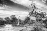 Awesome South Africa Collection B&W - African Landscape with Acacia Tree VI Photographic Print by Philippe Hugonnard